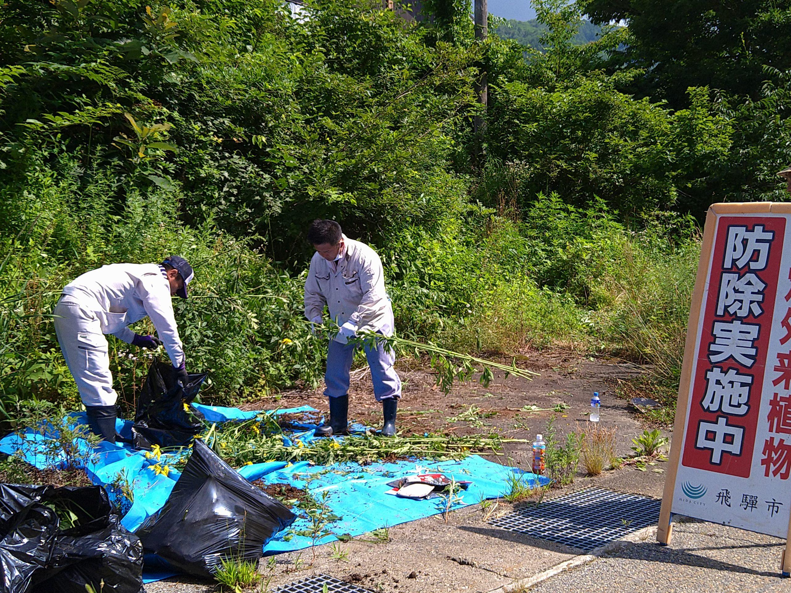 飛騨地区環境クリーンキャンペーン~特定外来種の防除作業を実施